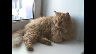 Международный день кошек: самые известные котики Красноярска