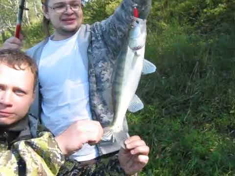 Поймали судака на спининг на реке Иня