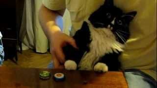 Repeat youtube video Кот играет в наперстки смотреть всем прикольно