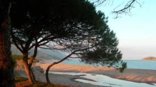La cicala  - Riccardo Del Turco