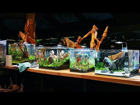 Zoo&Zo - Netherlands (Aquascaping Event)