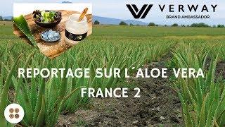 Reportage sur l´Aloe Vera - France 2