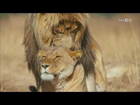 Lionsrock - Die Heimkehr des Königs - ARTE HD