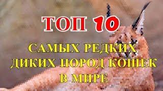 ТОП 10 САМЫХ РЕДКИХ ДИКИХ ПОРОД КОШЕК В МИРЕ