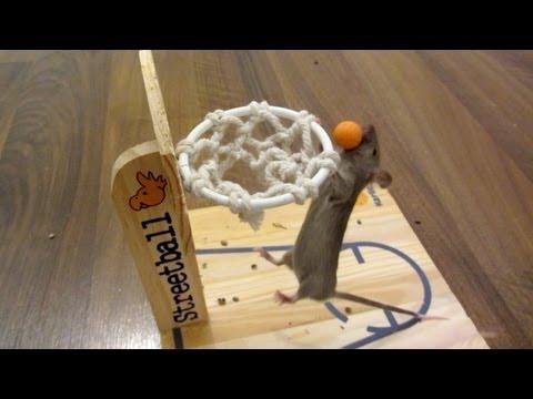Mouse Basketball Tutorial