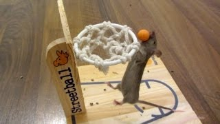 mouse basketball tutorial