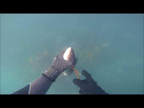 Cape Campbell Marlborough Sounds Diving Jan 2018