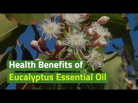 health-benefits-of-eucalyptus-essential-oil