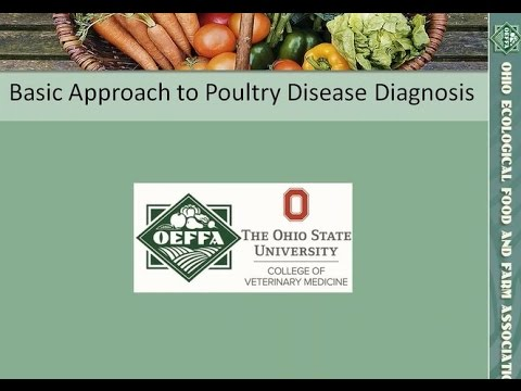 A Basic Approach to Poultry Disease Diagnosis