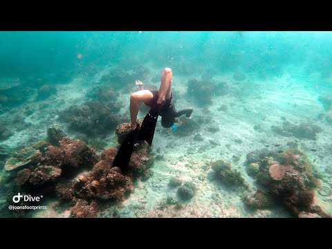 BATANGAS FREEDIVING AND CLEANUP DIVE