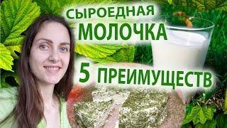 сыроедная МОЛОЧКА, 5 преимуществ! сыроедное молоко, творог, сыр
