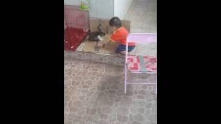 Fatih Bermain dgn kelinci