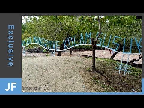 wisata-hutan-mangrove---kolam-susuk,-belu---ntt