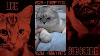 The Best Of Tik Tok Pets Funny Animals #27