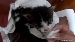 Котята впервые в жизни едят творог. Часть 1.