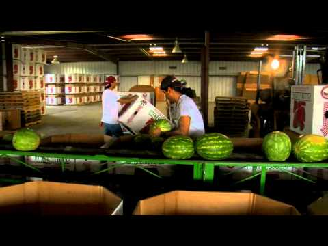 American Harvest Documentary 18min featurette 720p Youtube farmworkers farmers