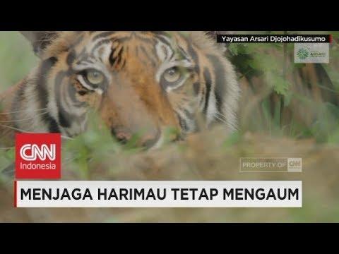 Menjaga Harimau Tetap Mengaum - Insight With Desi Anwar