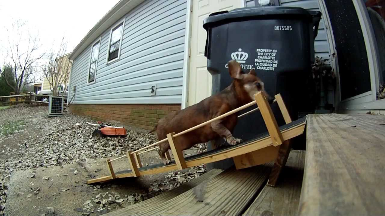 Doggie Handicap Ramp!   YouTube