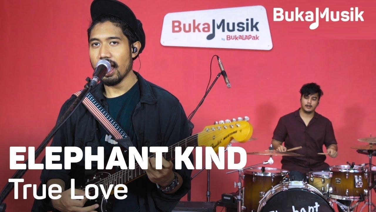 elephant-kind-true-love-with-lyrics-bukamusik-bukalapak