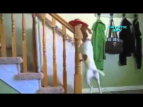 Lachen om home video's