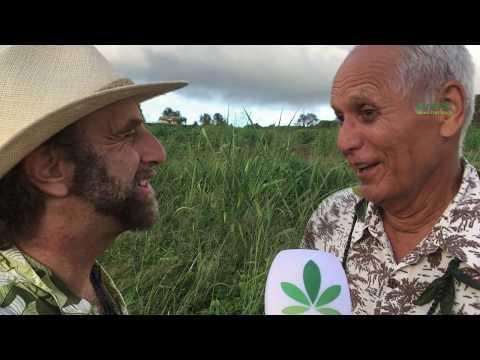 Hawaii, the hemp capital of the world?