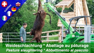 Weideschlachtung - Eine tiergerechte und stressfreie Schlachtmethode (Mai 2015)