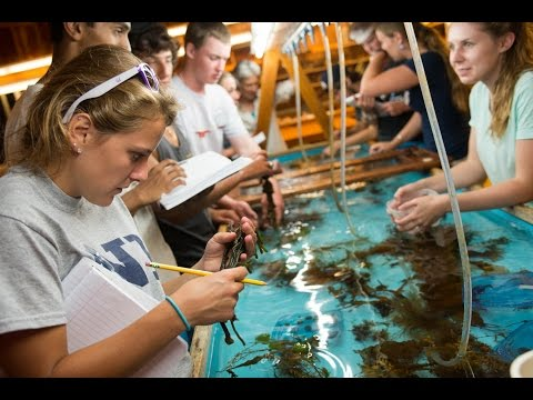 UNH Marine Biology Bootcamp