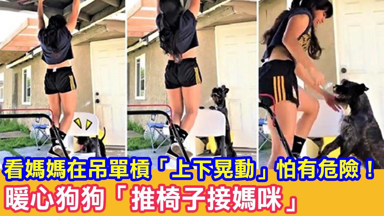 看媽媽在吊單槓「上下晃動」怕有危險!暖心狗狗「推椅子接媽咪」|狗狗故事