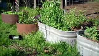 Tour Of Hilda's Herb Garden!