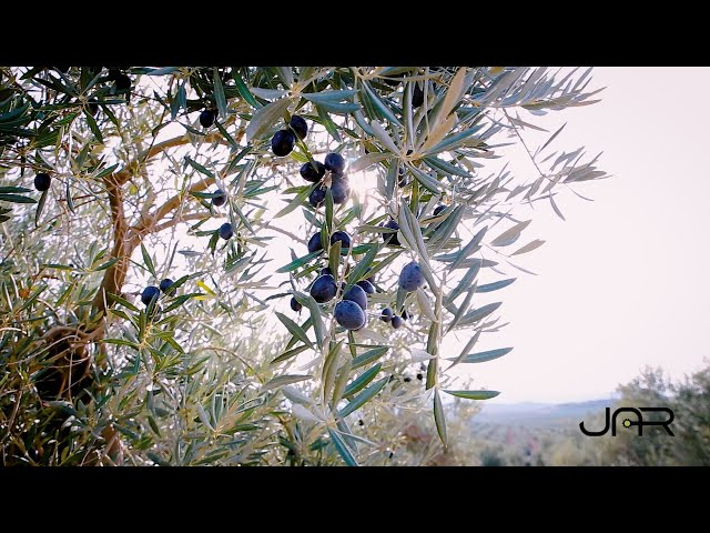 JAR - Video Comercial