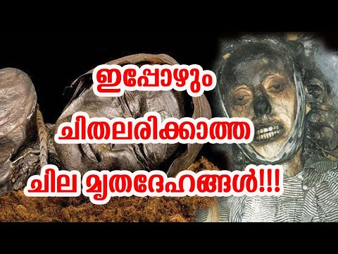Corpses that do not Rot after Death !!