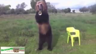 Приколы с медведями и людьми