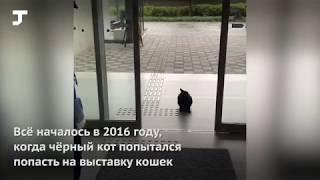 В Японии коты два года безуспешно пытаются попасть в музей