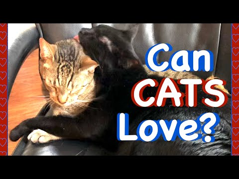 DO THESE CATS LOVE EACH OTHER⁉️ 🐾 Watch This Video And Tell Us