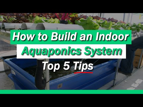 How to Build an Indoor Aquaponics System With 5 Helpful Tips