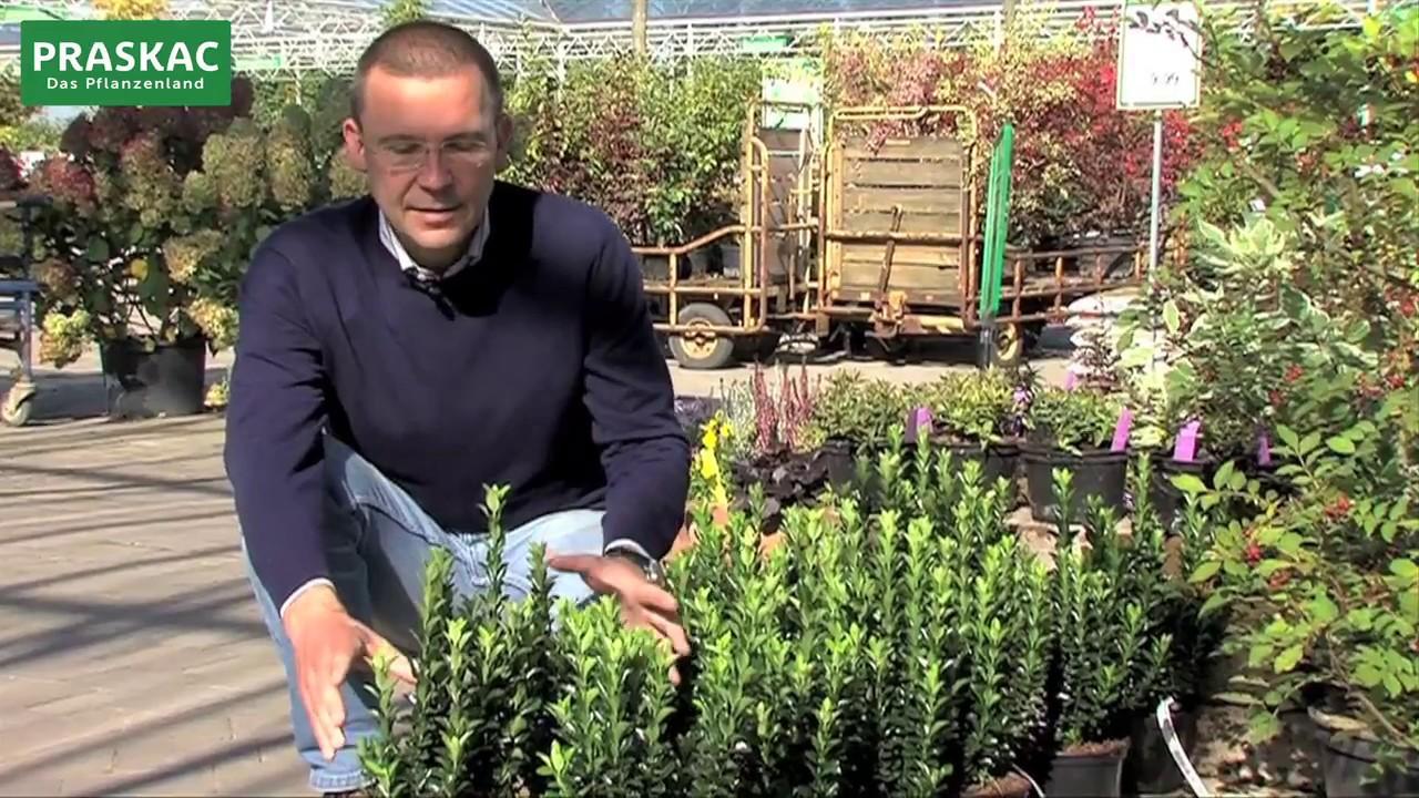 Hecken Im Garten Sichtschutz Youtube