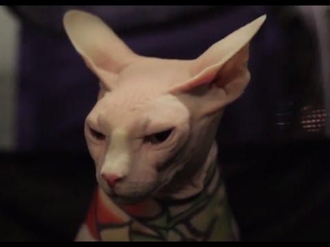 Sphynx - Cat Breed Spotlight by Petco