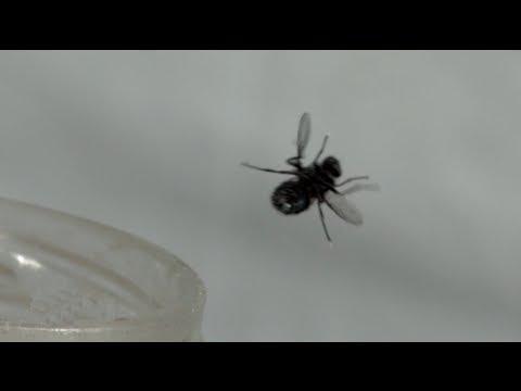 Bug-A-Salt: Slo-Mo Fly Annihilation