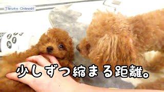 話題の動画☆ 9月7日(金)の夜に撮影した動画です   Taruちゃんに、少しず...