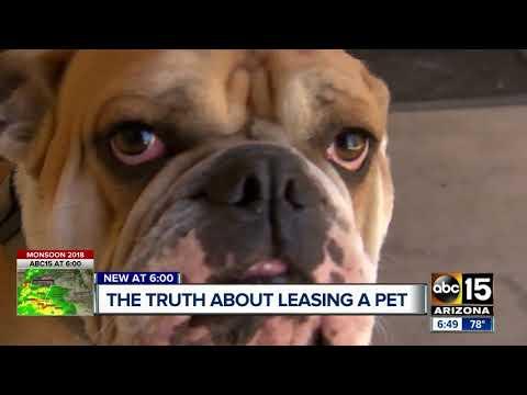 The hidden truths about leasing a pet