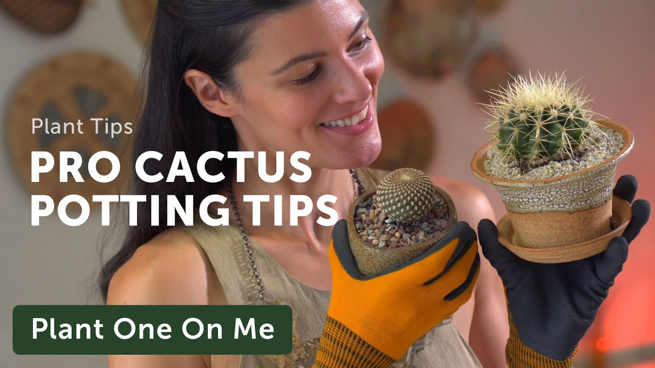 Repot a CACTUS (Without Getting Pricked) — Ep. 196