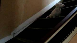 Rupert The Dog - Cute Puppy Learning To Climb Stairs