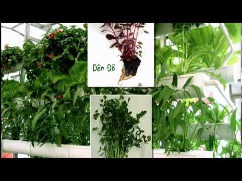 Giải pháp mới trồng rau sạch tại nhà