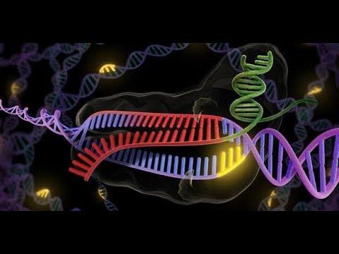 شرح RNA الجزء الثاني rRNA أ / محمد العدلي أحياء ثانوية عامة