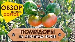Помидоры на открытом грунте! Обзор популярных сортов России.