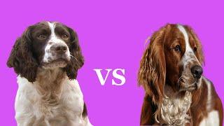 English Springer Spaniel vs Welsh Springer Spaniel | Which Is A Better Pet?