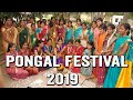 Pongal Festival 2019 | Significance Of Pongal | Pongal Rites | Hindu Rituals