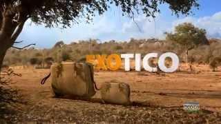 TICO Wild Suitcases 2015