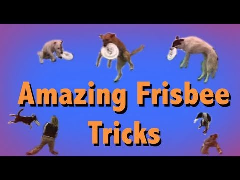 THE MOST AMAZING FRISBEE DOG TRICKS!
