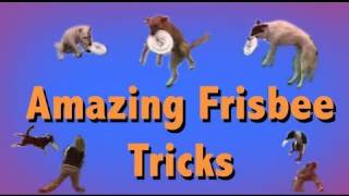 THE MOST AMAZING FRISBEE DOG TRICKS!